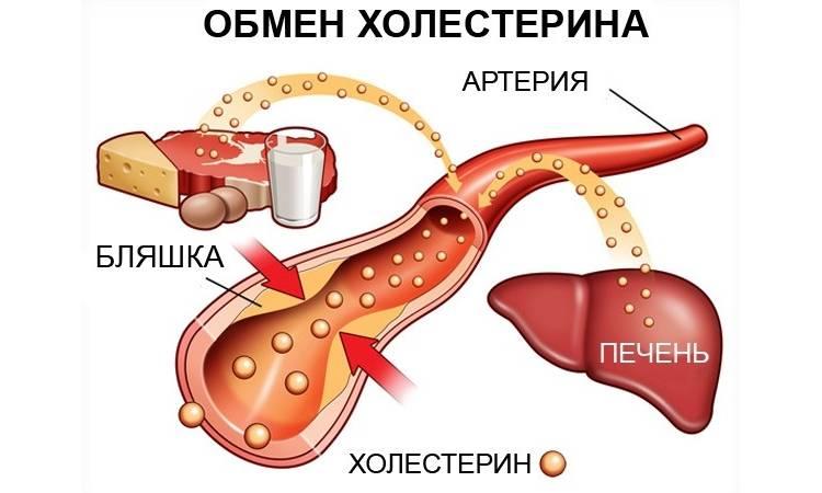 Механизм попадания этого вещества в кровеносные сосуды