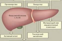 Фазы метаболизма лекарственных средств в печени