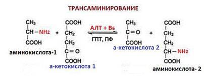 Схема реакции трансаминирования