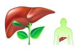 Препарат повышает устойчивость печени к разрушительным влияниям.