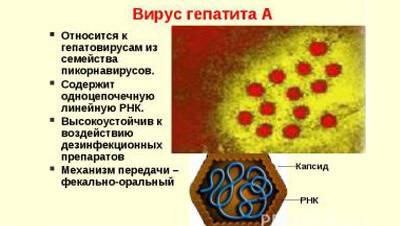 Схема гепатита А