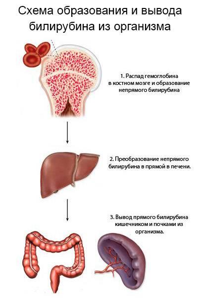 Глюкуронид билирубина