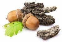 кора дуба лечебные свойства и противопоказания