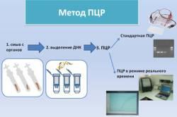 Проведение ПЦР при гепатите С