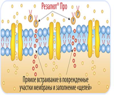 Механизм действия резалюта