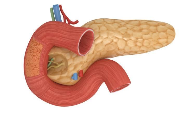 Визуализация поджелудочной железы