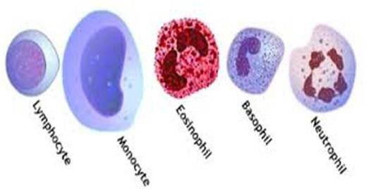 Сдвиг лейкоцитарной формулы влево у детей