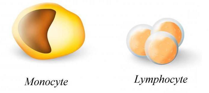 Анализ крови сдвиг лейкоцитарной формулы