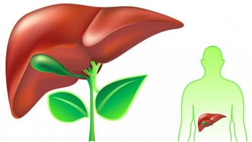 Травы применяемые при лечении гепатита C