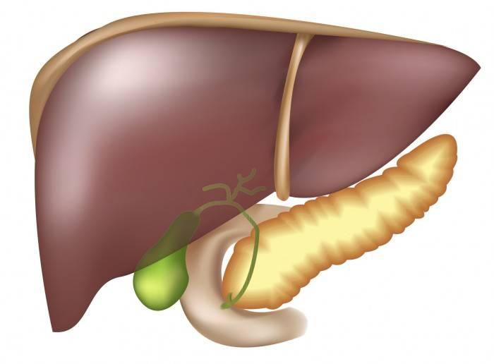 Гепатит, холецистит и панкреатит - болезни, которые часто сопутствуют друг другу.