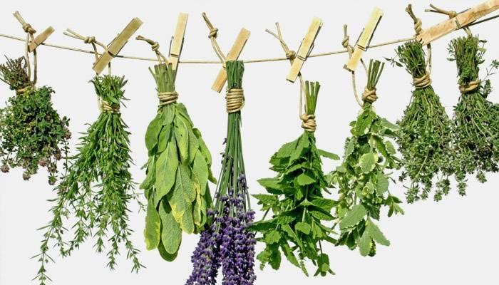 Травы для чистки печени