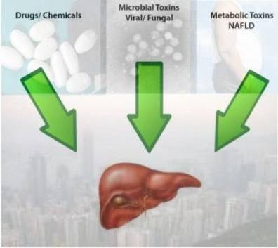 токсический лекарственный гепатит лечение