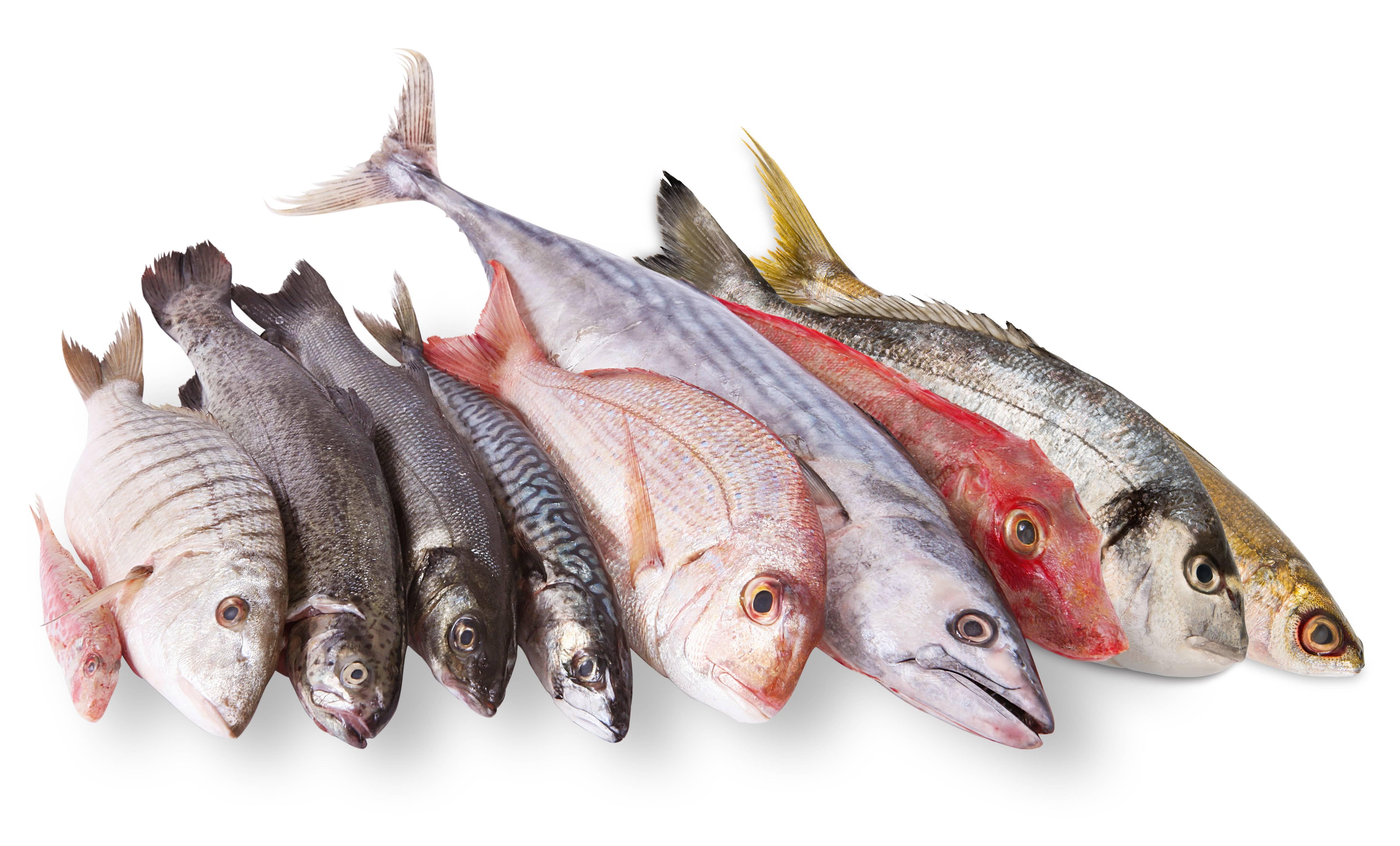 В какой рыбе есть описторхоз — Все о печени