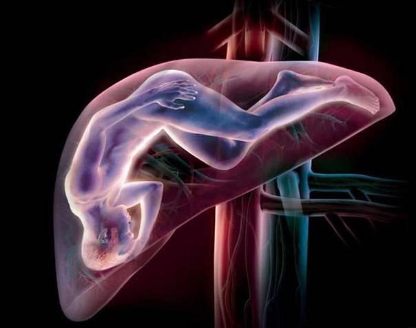 Народные методы и средства лечения гепатита С