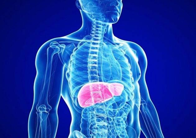 Печень: орган, который поражает гепатит B