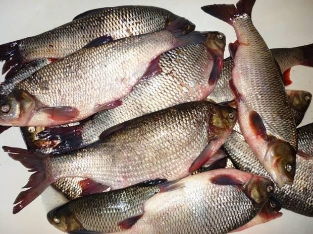Рыба, зараженная описторхозом