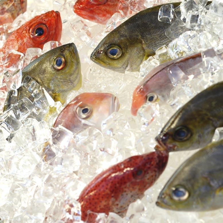 Описторхоз и заморозка рыбы