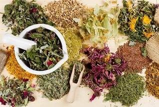 Целебные растения от рака печени