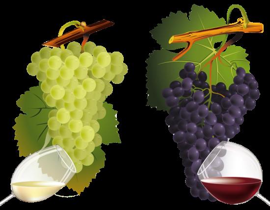 4880054_klipart_vinograd_vino_1_ (550x428, 268Kb)
