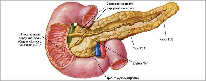 Диффузия поджелудочной железы лечение